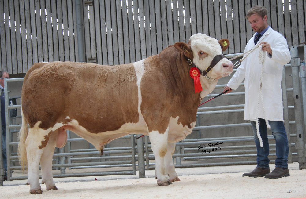 Matthew Robson, Doagh, exhibited the first placed Kilbride Farm Herkules sold for 2,800gns.