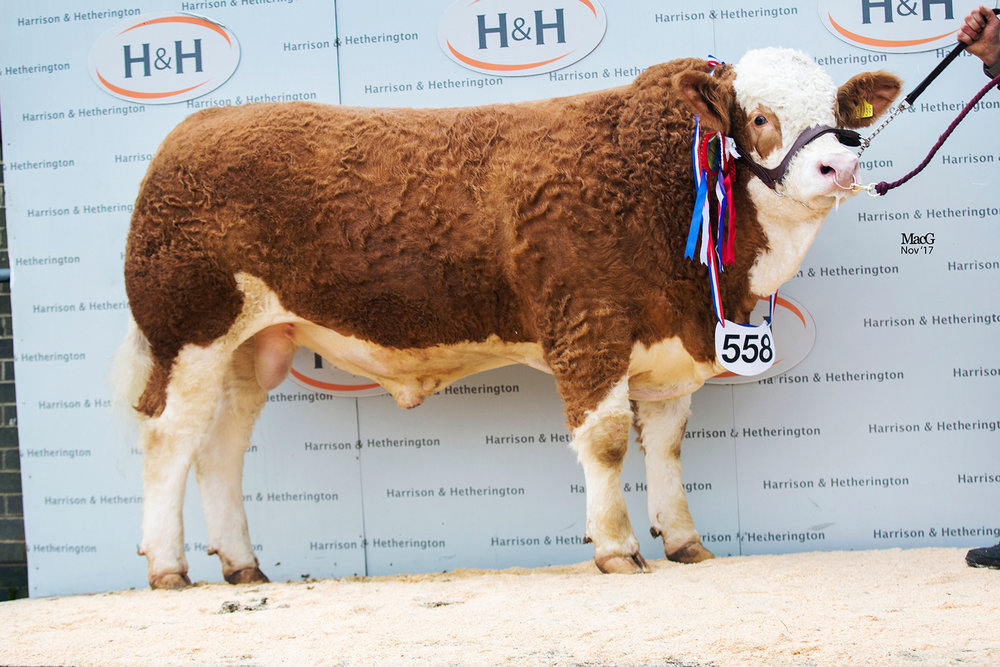 Thursford Hero - Senior Male Champion & Reserve Senior Champion (pictured at the Agri Expo 2017)