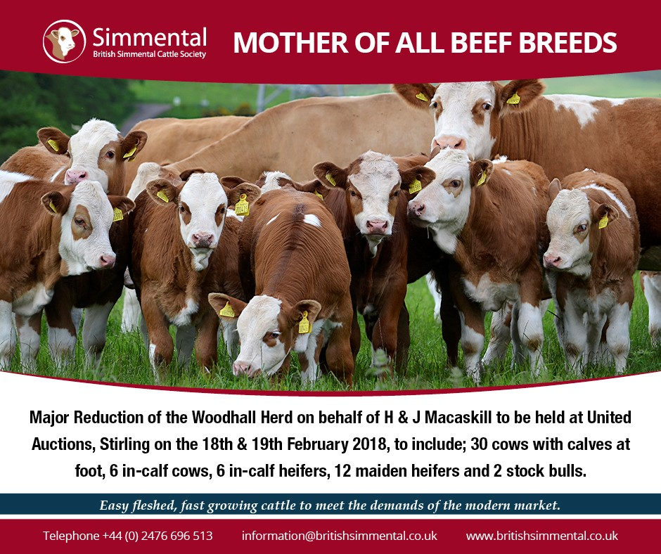 Woodhall Advert.jpg
