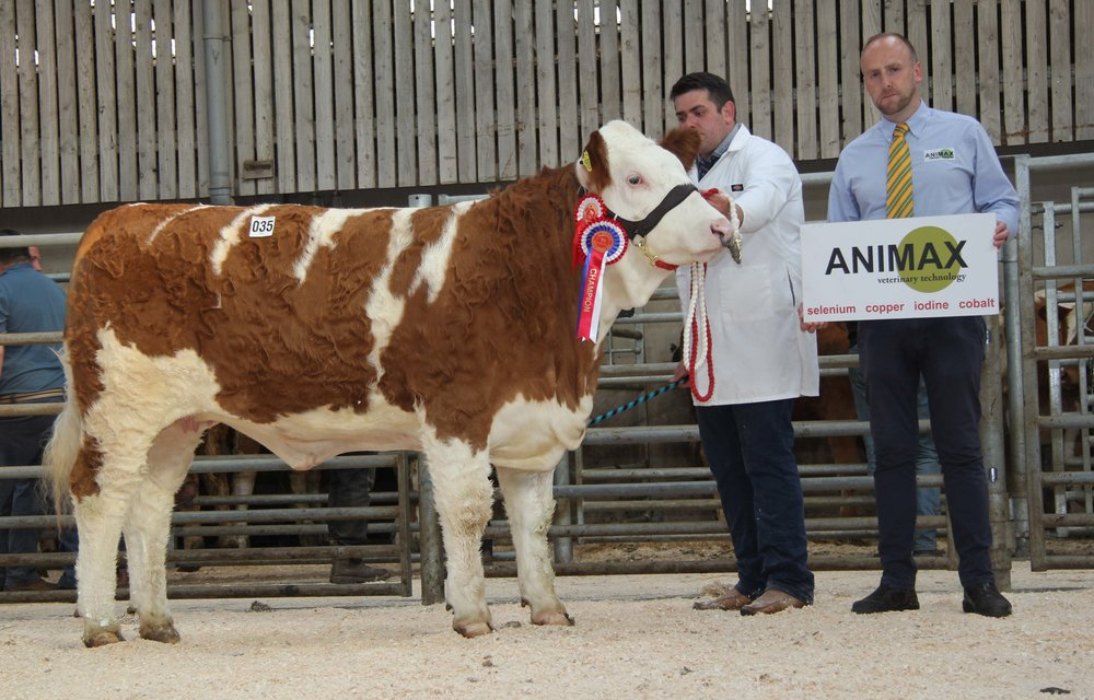 Richard McKeown exhibited the female champion Castlemount Angela 2nd on behalf of Duncan McDowell, Newtownards. Addiing his congratulations is Neill Acheson, Animax, sponsor.