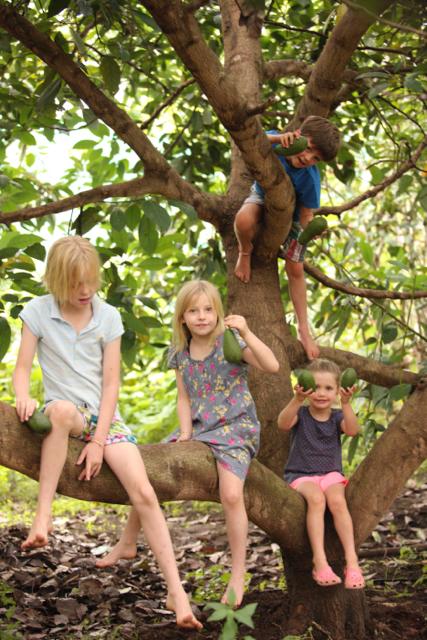 Tree climbing in the organic garden.jpg