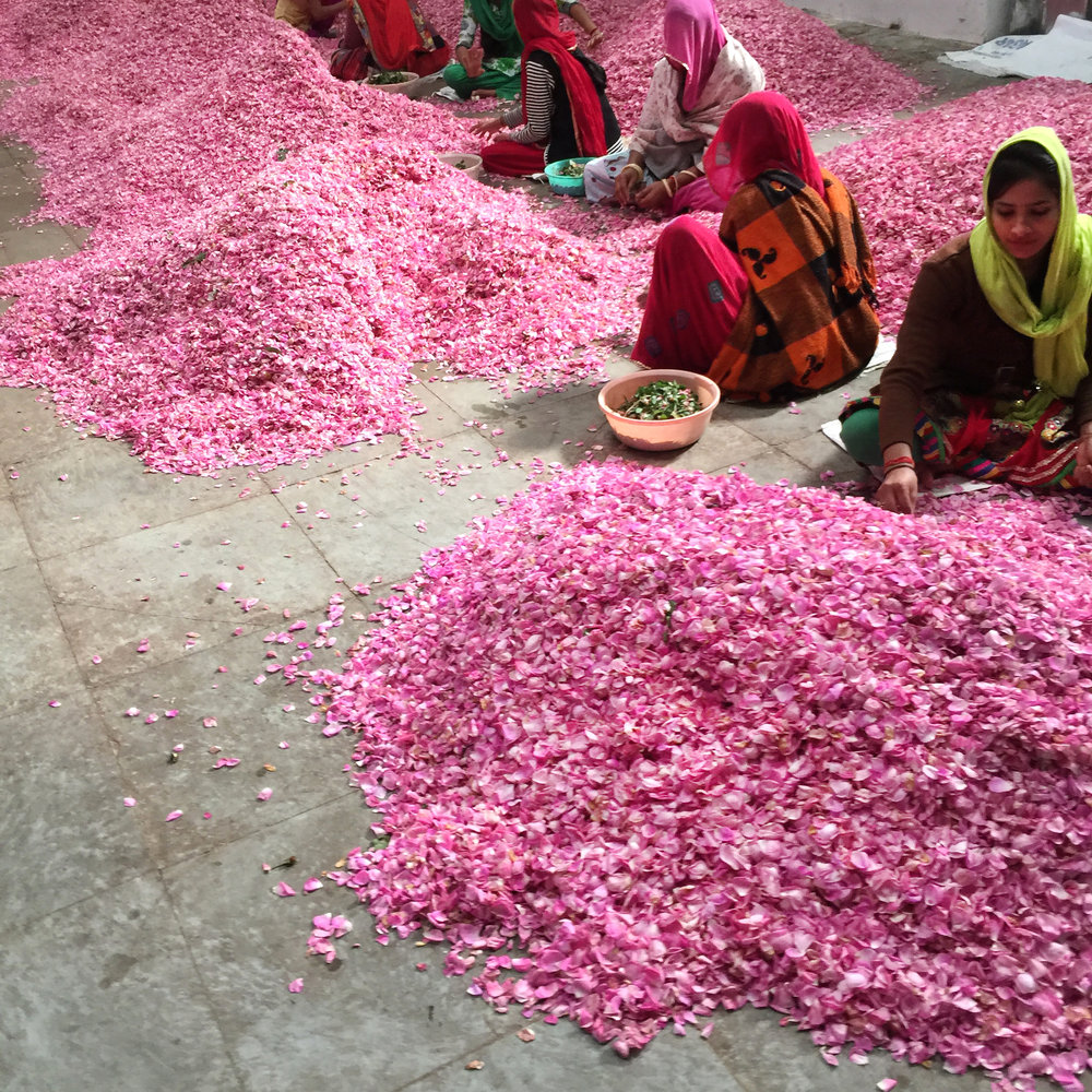 One of Megan Morton's favourite places in India, the Pushkar rose farm where oil is naturally distilled and daily rituals are centuries-old.