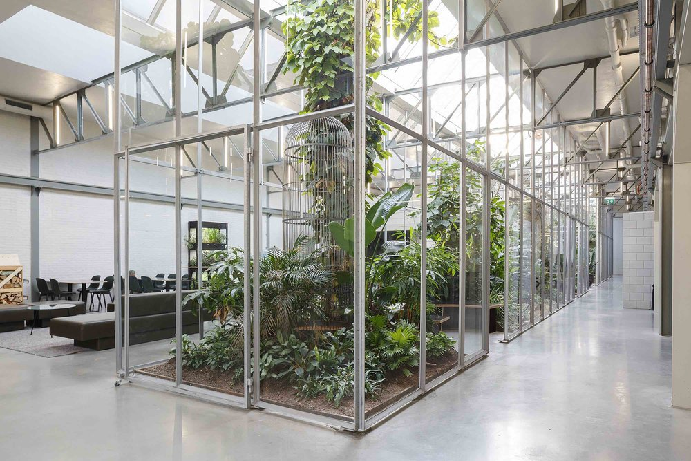 Large glazed internal gardens improve the climate inside the Joolz offices and provide places to retreat and relax.