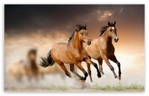 horses_running_2-t2.jpg