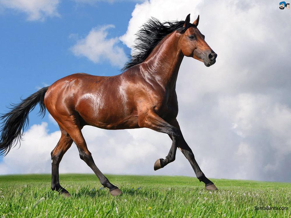 horses-62a.jpg