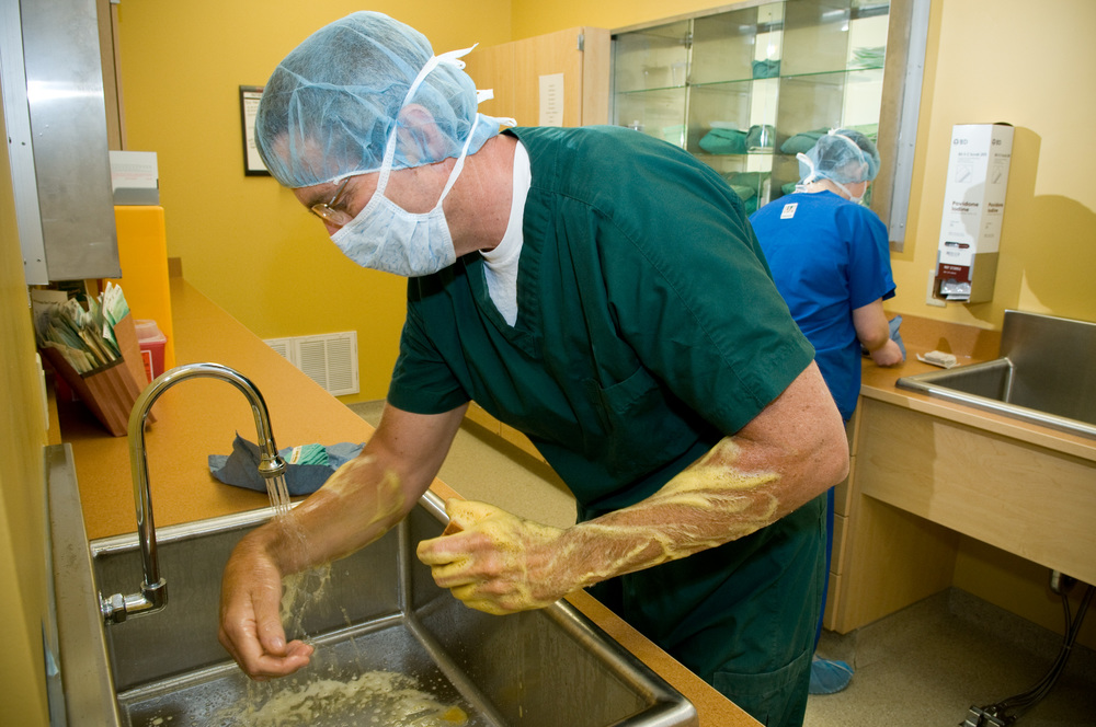 The surgeon and surgical scrub assistant (a Licensed Veterinary Technician or veterinarian) scrub in a specialized area outside the surgical suite. Caps, gowns, masks, and shoe covers are worn. Traffic is restricted in and around the surgical suite.