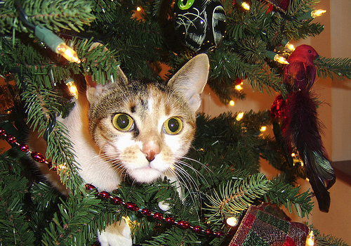 Cat-in-Christmas-Tree