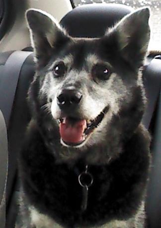 Pet Health — VMC Blog — Veterinary Medical Center of CNY