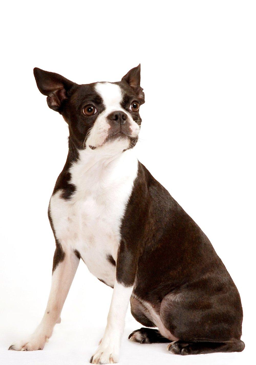 Finn Puppy.jpg