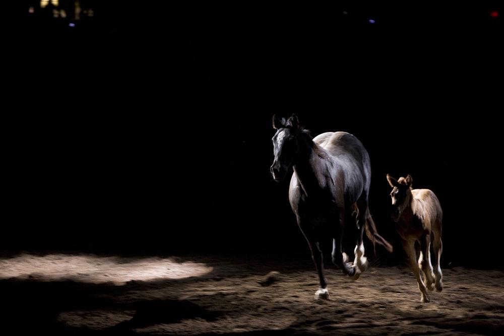 Cowgirl_3.jpg