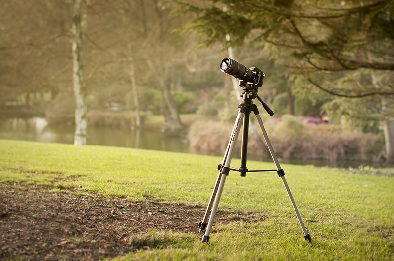 A telephoto lens is essential to fill the frame, whilst the tripod holds your composition steady