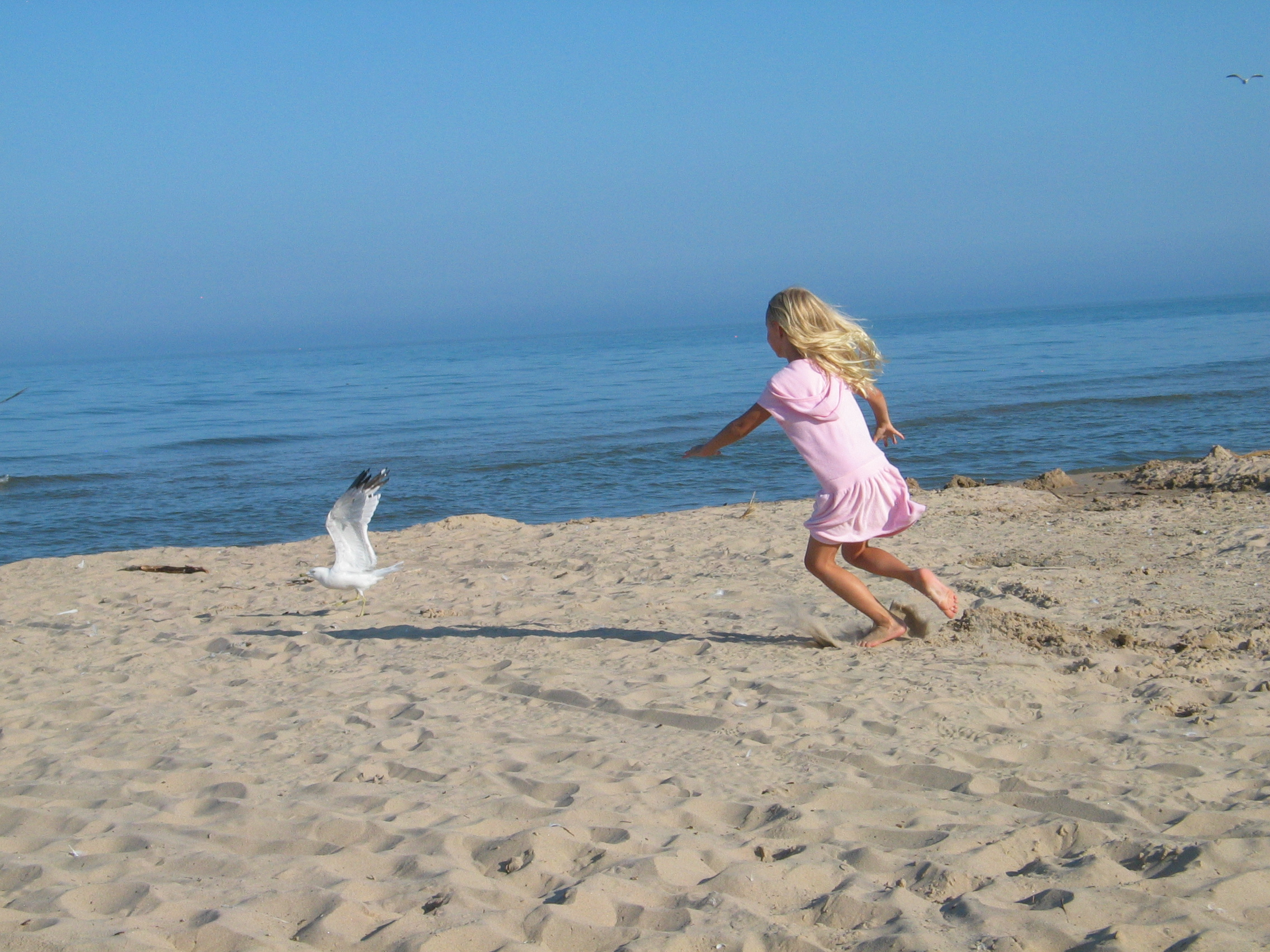 Kat chases seagulls... again