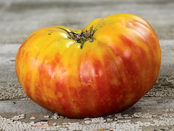 Hill-Billy-or-Flame-Tomato-web.jpg