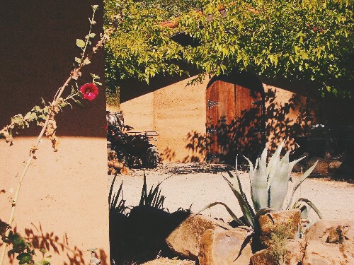 Winery-door-succulent.JPG