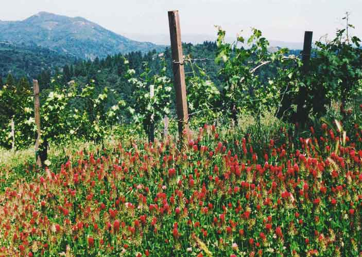 Clover-vineyards-web-500.jpg