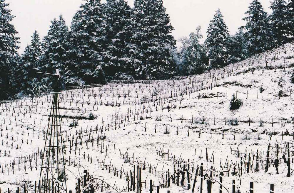 Wing-Canyon-Vin-Winter-vines-web.jpg