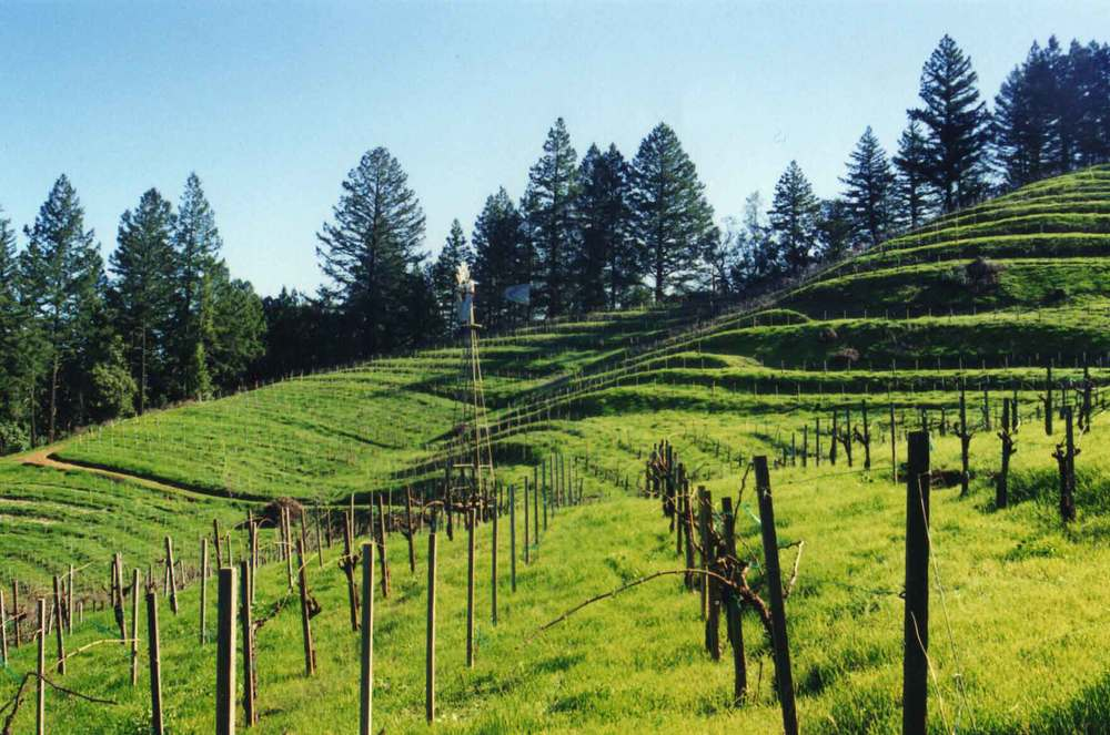 Wing-Canyon-Vin-Spring-vines-web.jpg