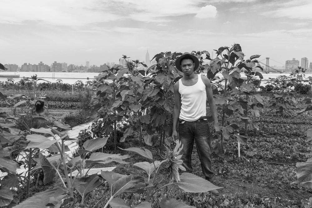 """Urban Farmer: Brooklyn, 36""""x48"""", Silver Gelatin Print, 2015"""