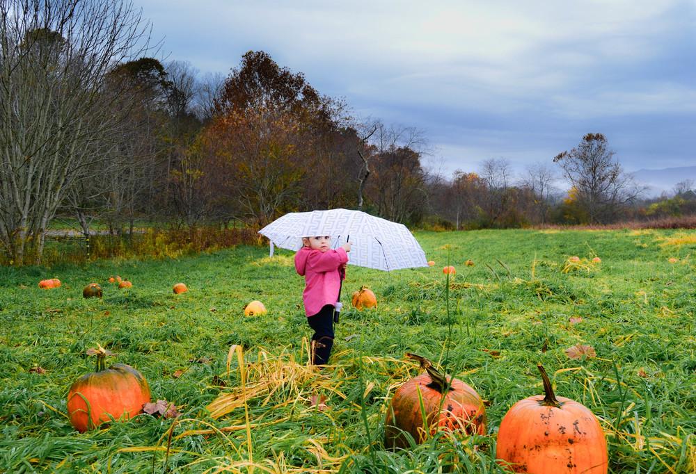Pumpkin Rain