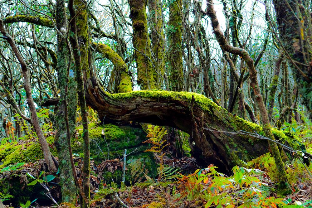 Moss Ness