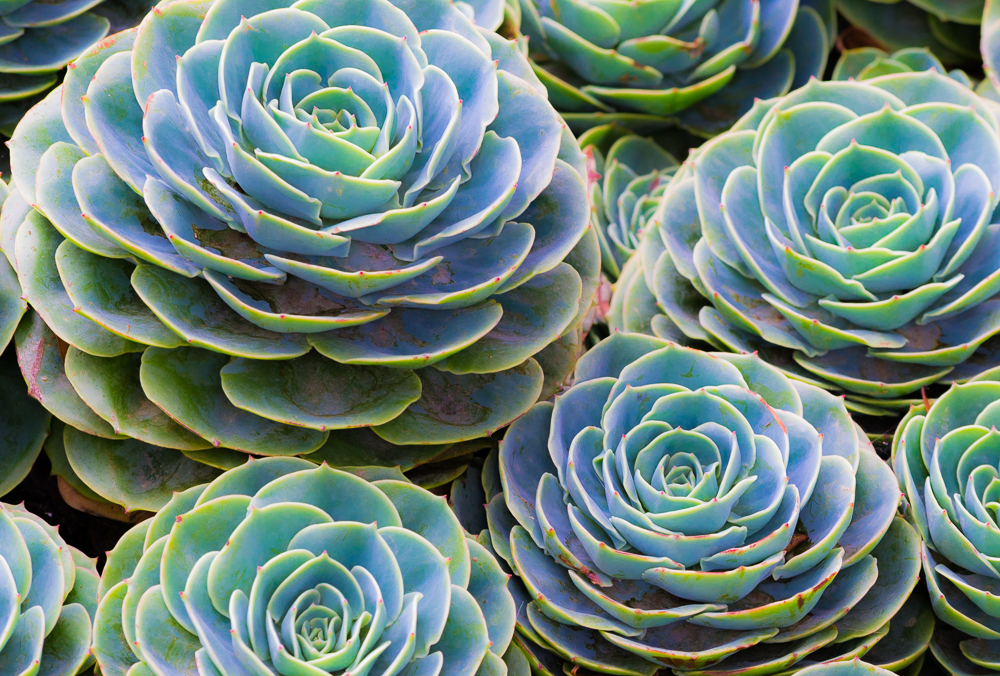 succulent web_DSC0299.jpg