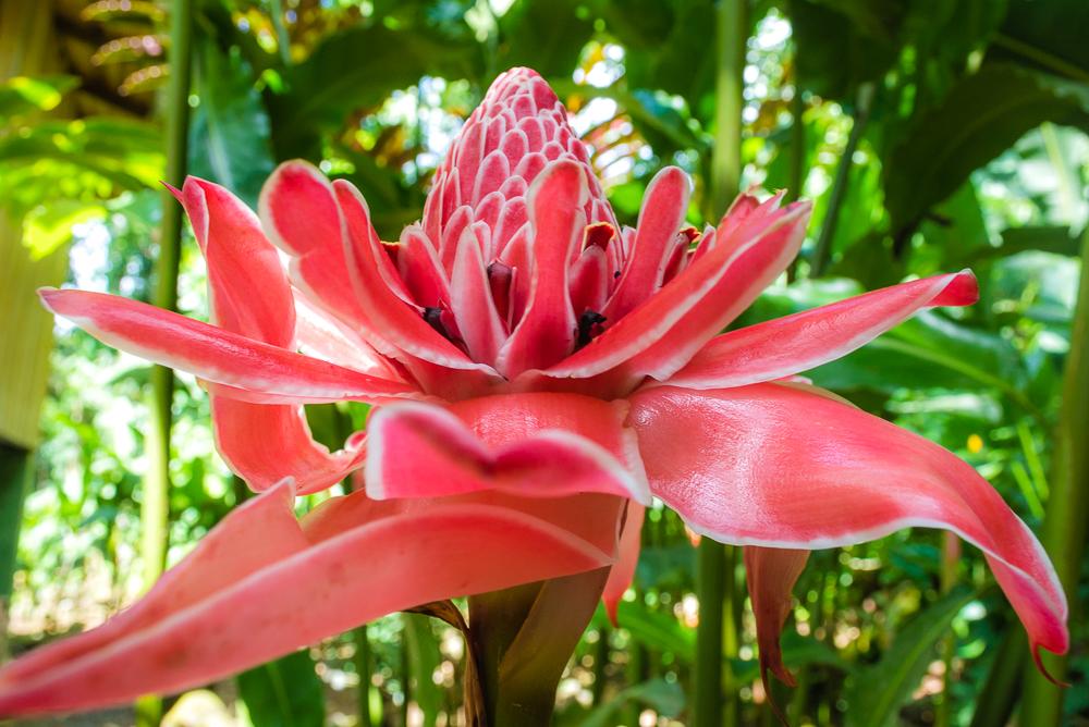 flower pink web_DSC0423.jpg