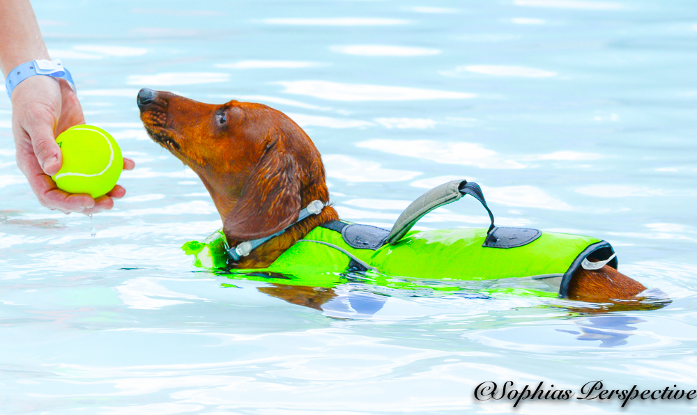 weenie dog.jpg
