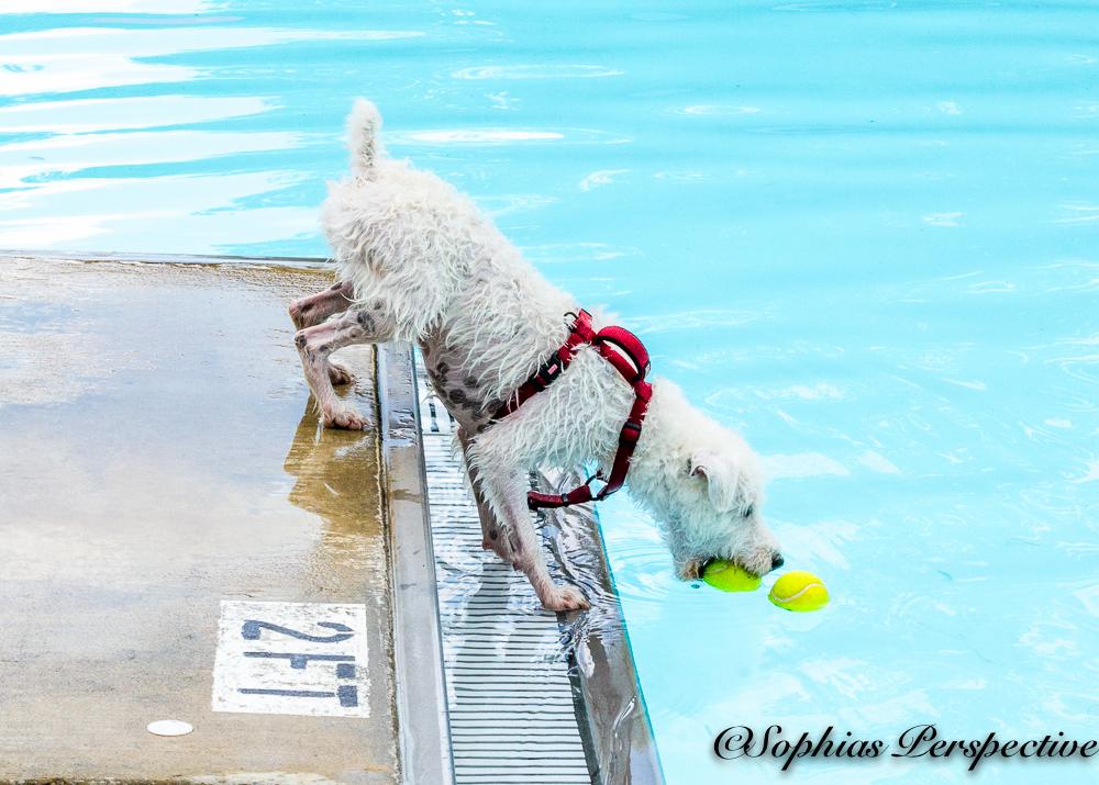 leaning white dog .jpg