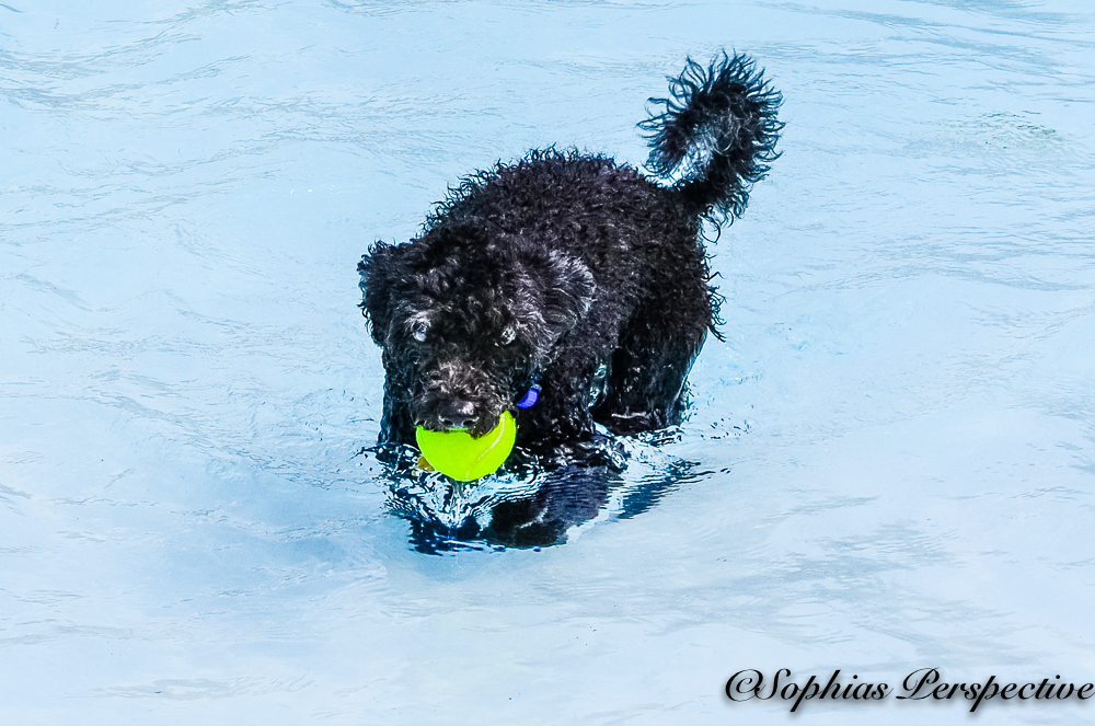 tiny black with ball.jpg
