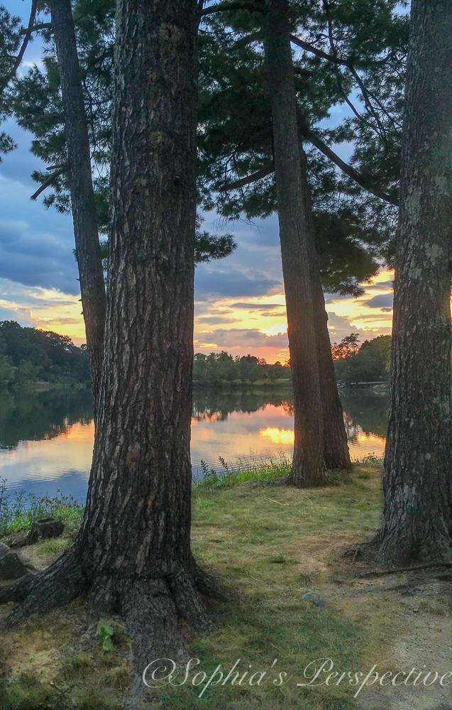 beaverdam lake behind trees.jpg