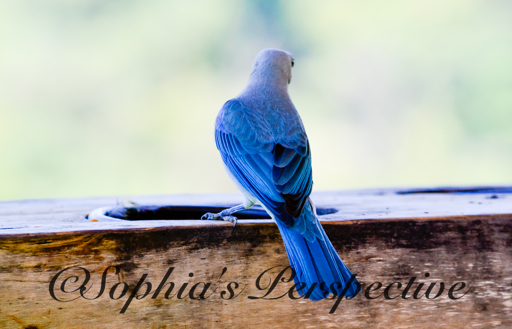 blue bird costa fb.jpg