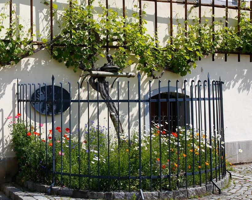 La  stara trta de Maribor , située en Slovénie, la plus vieille vigne du monde (400 ans) : cépage bleu de franconie franc de pied. Source : http://maribor-pohorje.si/stara-trta/hisa-stare-trte.aspx