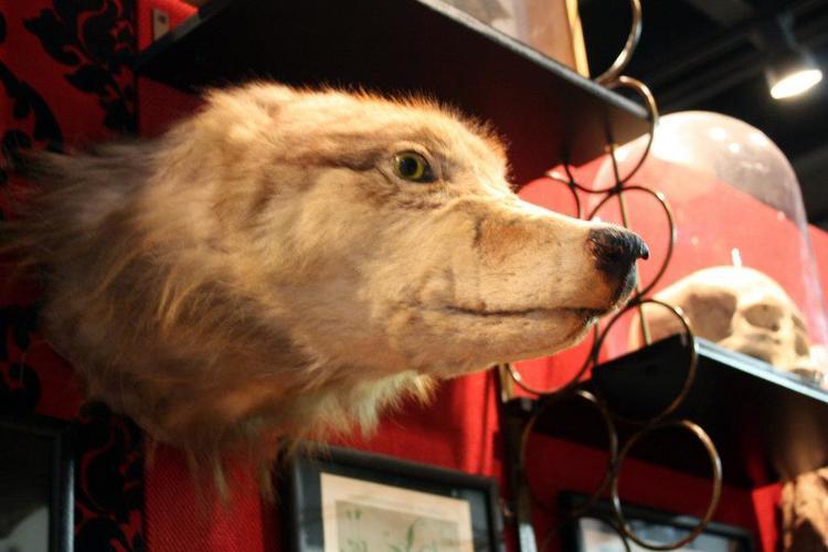 dog-head-01.jpg