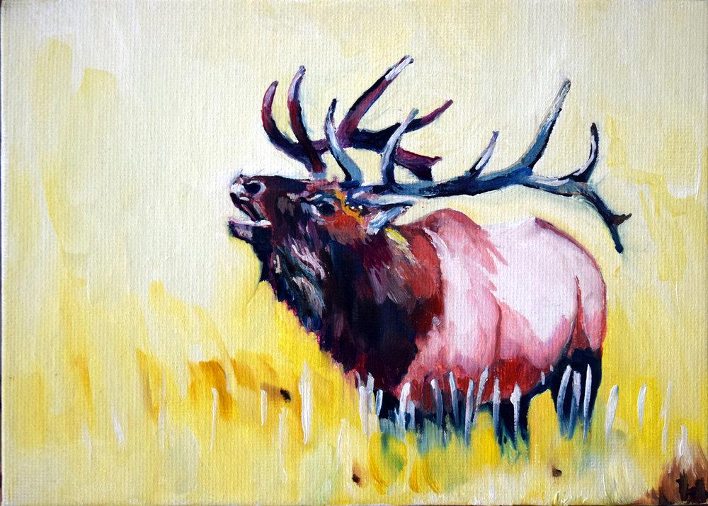 Elk_bugel.JPG
