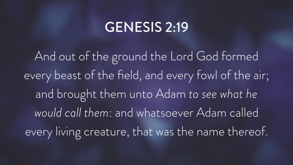 Genesis: In the Beginning...Grace - Part 1.023.png