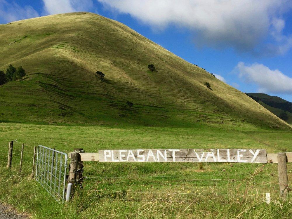 Pleasant Valley Blueberries