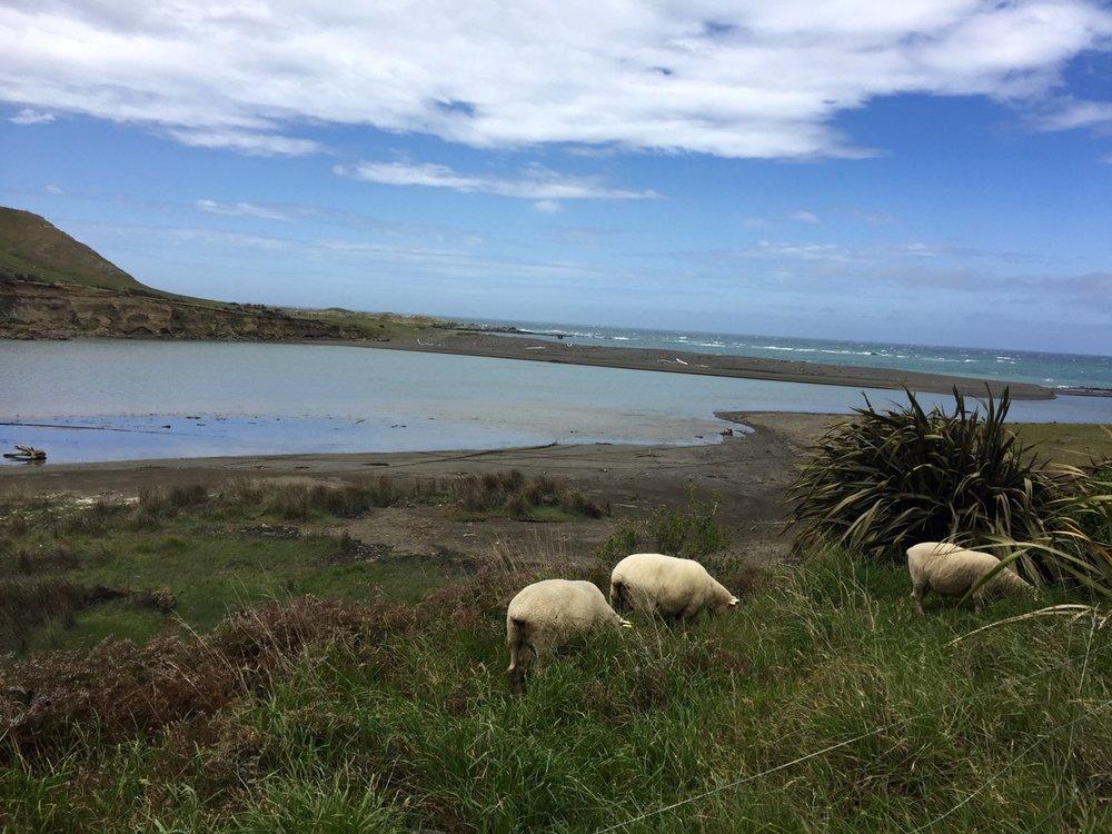 Wairarapa coastline