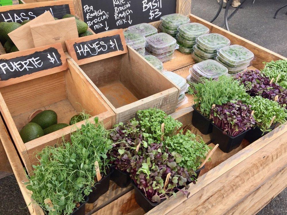 Gisborne farmers market and food trail