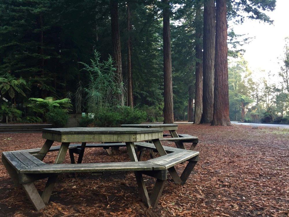 The Redwoods Whakarewarewa Forest
