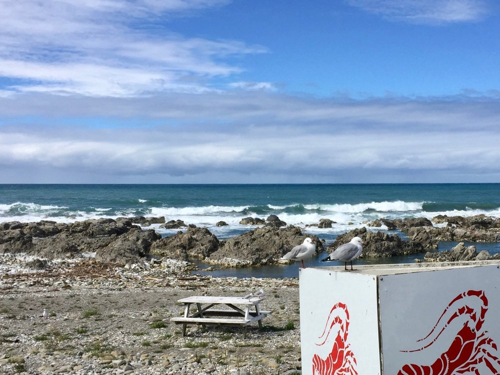 kaikoura food trail