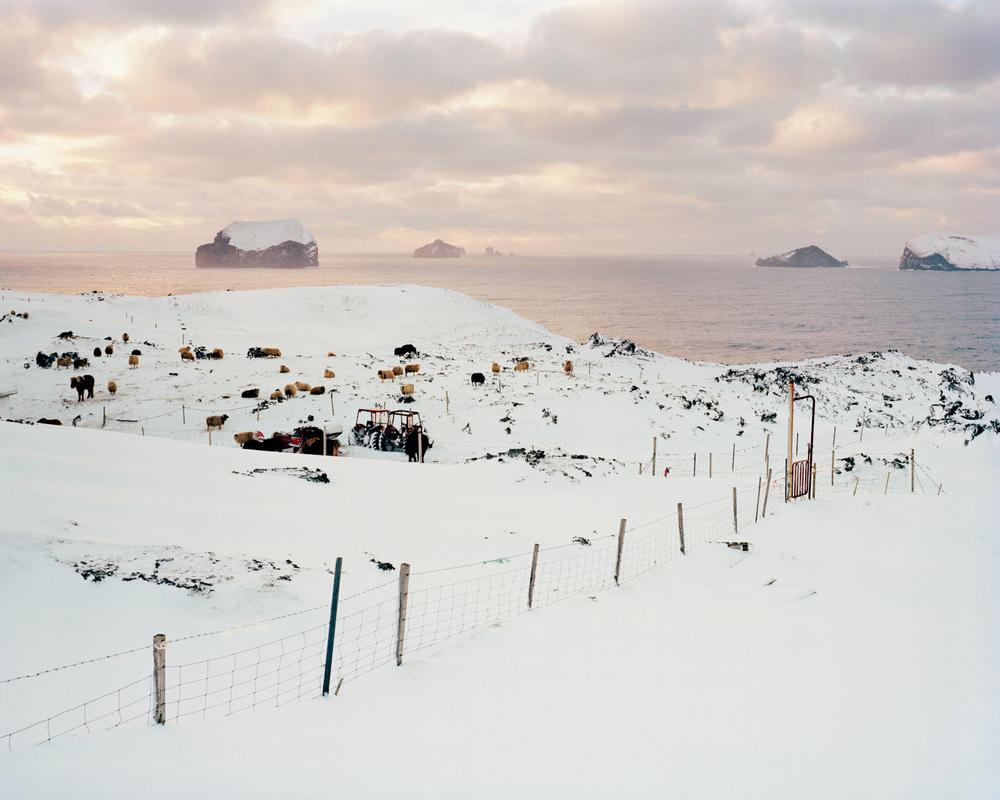 Hamarsvegur, Vestmannaeyjar, 2015.  Project Statement