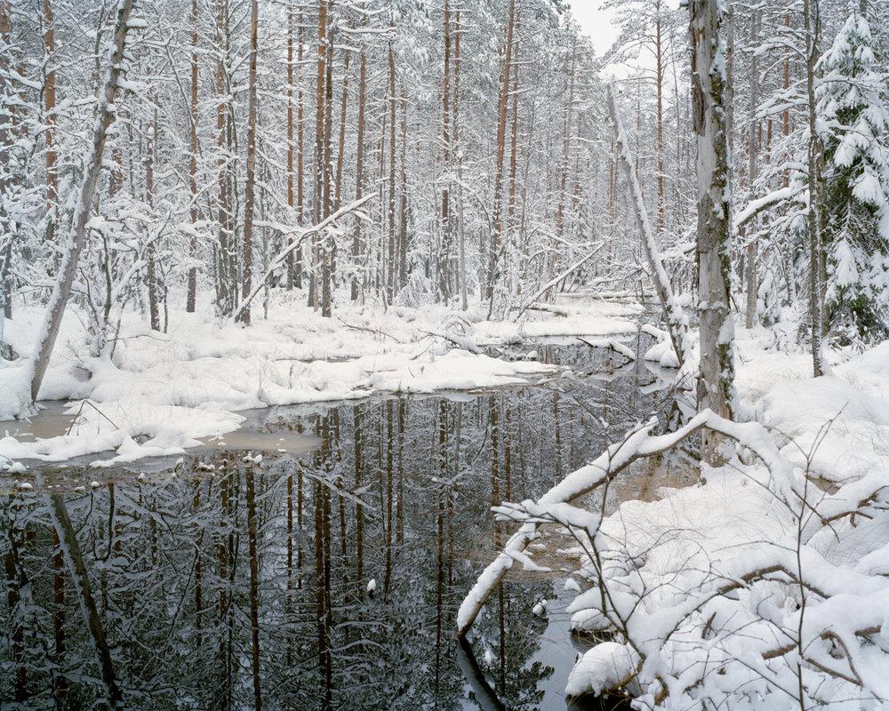 Swamp #1 , Seitseminen, Finland, 2017.