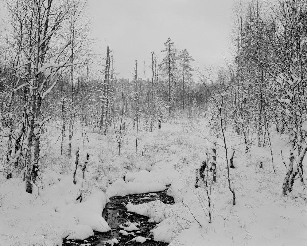 Swamp #2 , Seitseminen, Finland, 2017.
