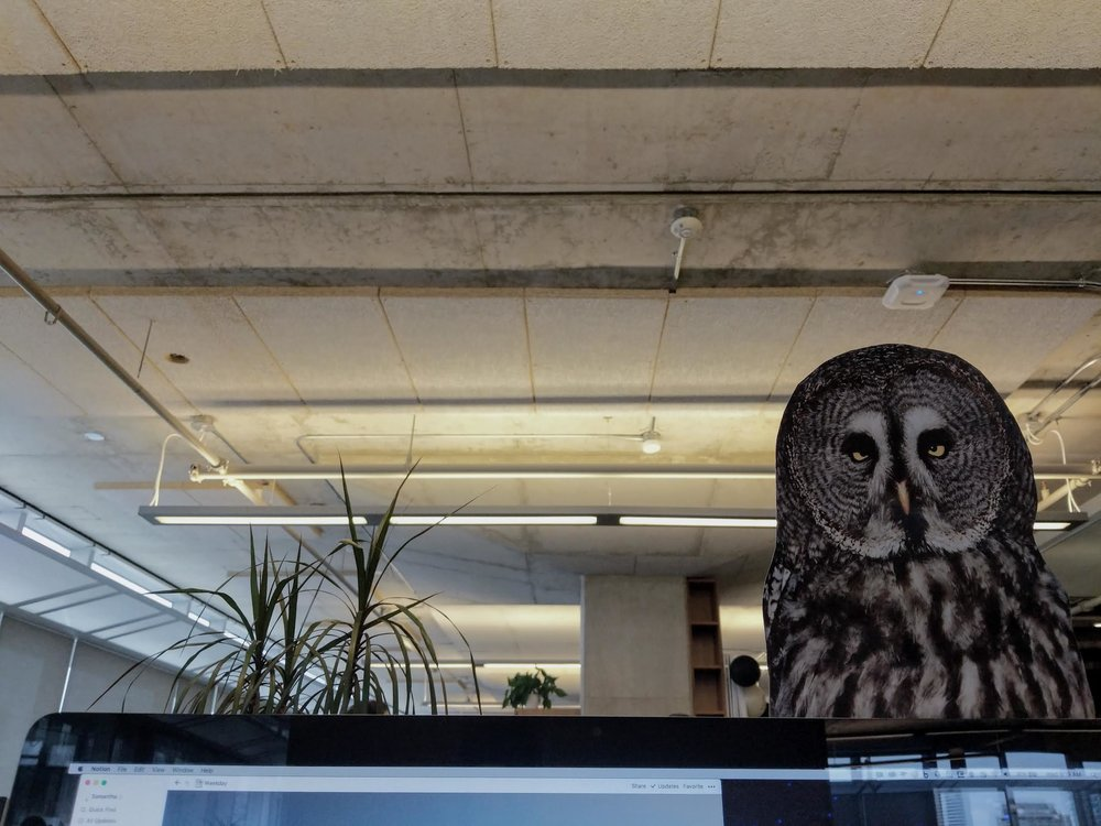 """""""Another year older, another year wiser"""" (I really just love this owl on my work monitor, no relation to this blog post but correlated owls being wise creatures)"""