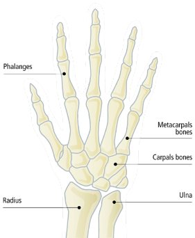 Hands1small.png