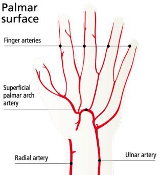 circulation and nerves