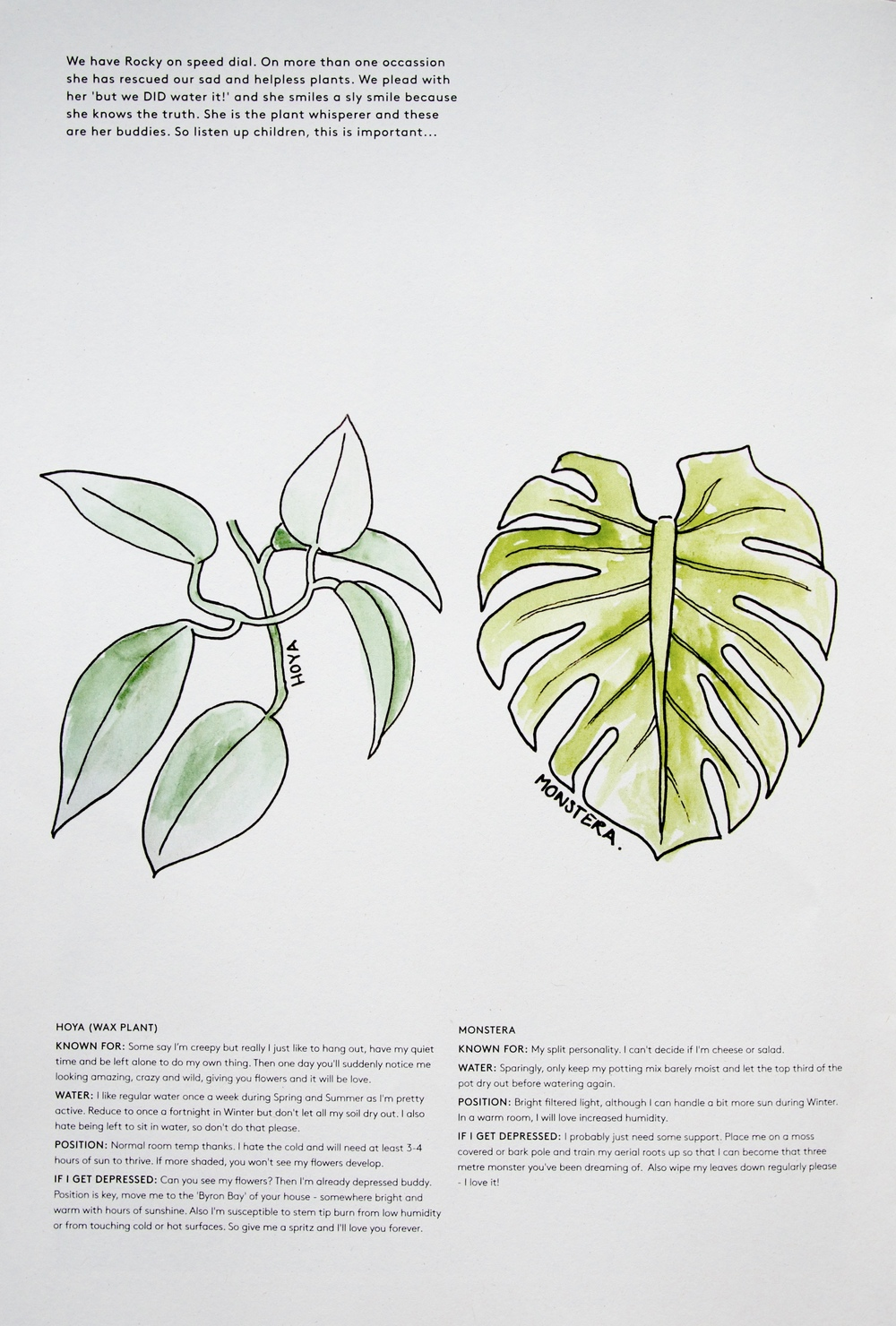 Have come together to create a small guide on finding the right position in your home for some popular indoor plants enjoy anna skeels illustrations