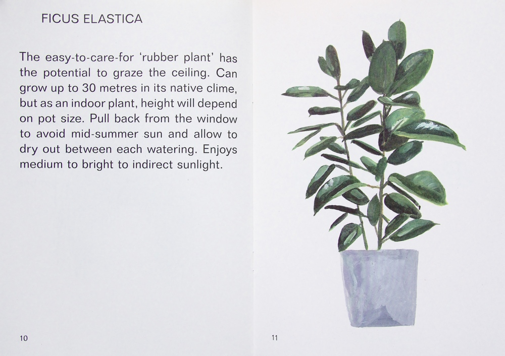 indoor indirect sunlight plants snake plant have come together to create small guide on finding the right position in your home for some popular indoor plants enjoy anna skeels illustrations indoor plant tips for brian