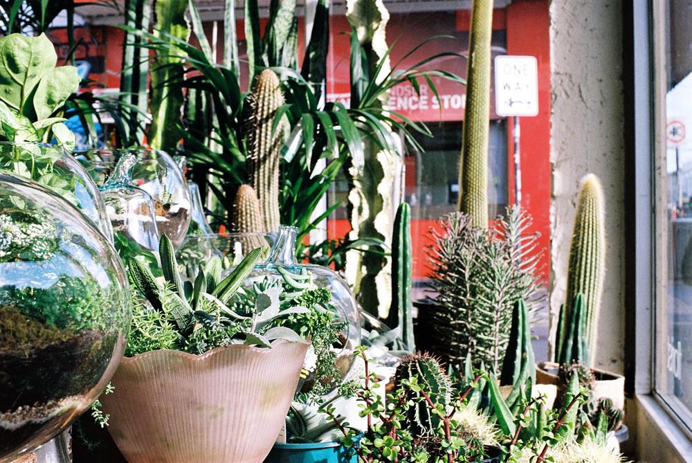cactus-inside-2-webweb.jpg