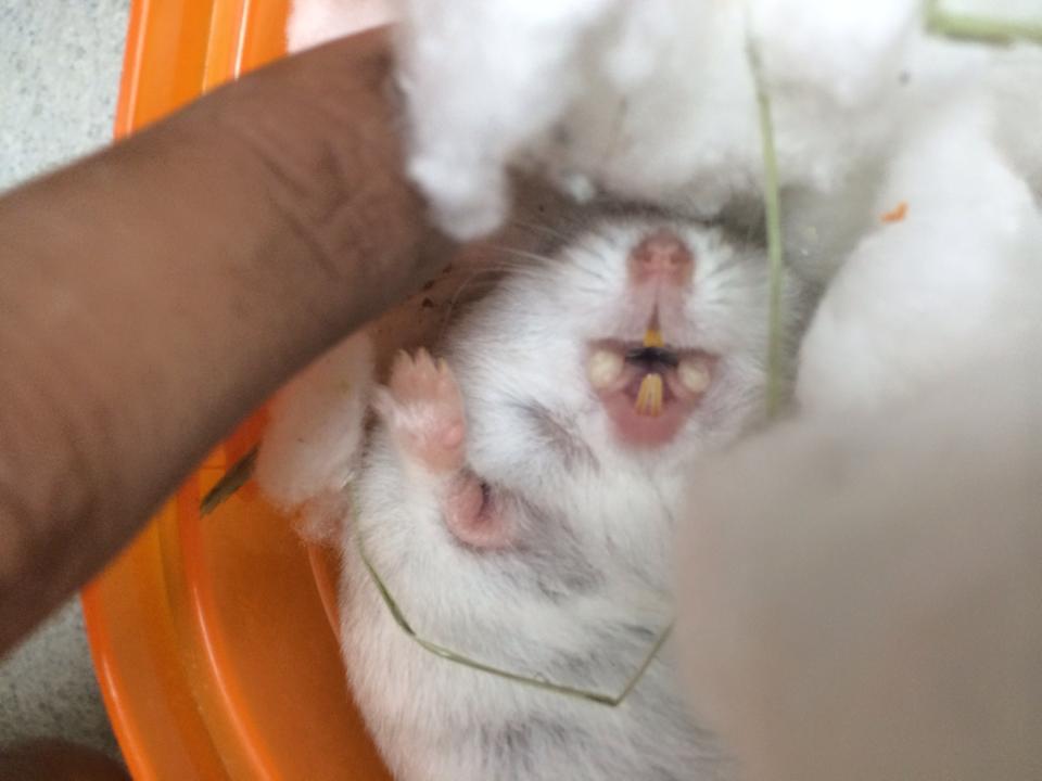 petcare for hamsters monster pet vet